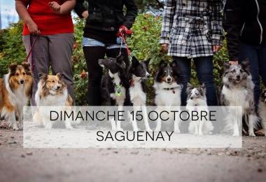Amis des animaux! La 2e édition de la Marche de la civilité a lieu ce dimanche